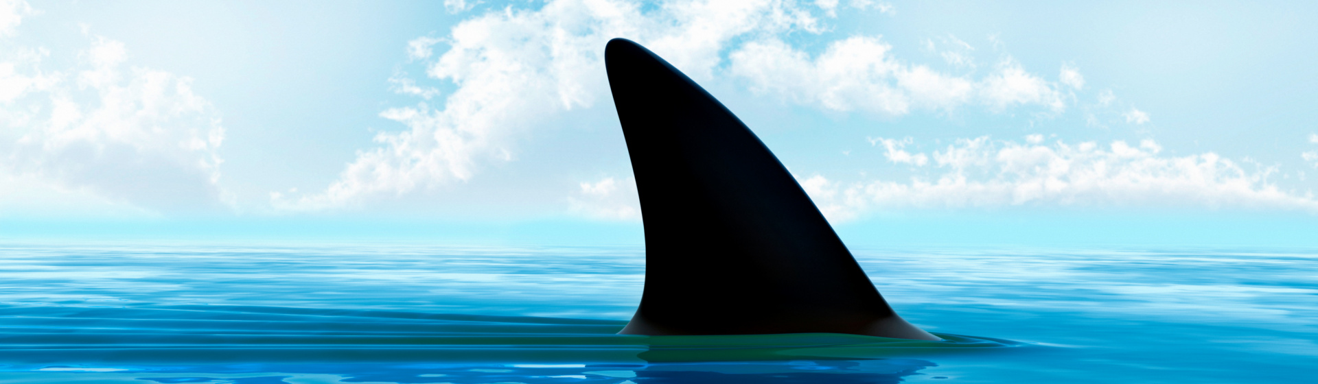 Beisst sich in nahezu allen Baustoffen fest: Der Kunststoff-Allzweckdübel SHARK® Pro